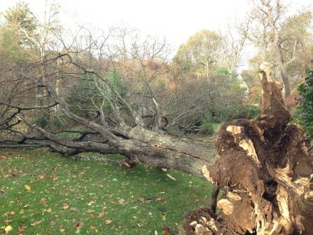 treebackyard